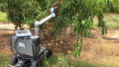 Peach picking robots could be the future for Georgia growers