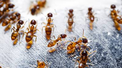 5 Things that listeners swear kill fire ants